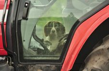 Free Dog In A Tractor &x28;Spaniel&x29; Royalty Free Stock Image - 25405286