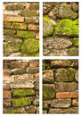 Free Tropical Moss On The Old Wall Stock Photos - 25418143