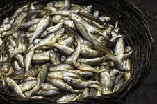 Free A Basket Of Fishes Royalty Free Stock Photos - 25410578