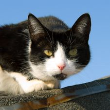 Free Cat On The Roof Stock Image - 25412261