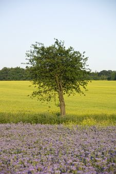 Free Apple Tree Stock Photos - 25417473