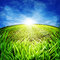 Free Sunny Morning On The Meadow Royalty Free Stock Image - 25416696