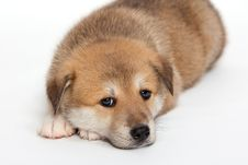 Free Sad Puppy Stock Photo - 25421330