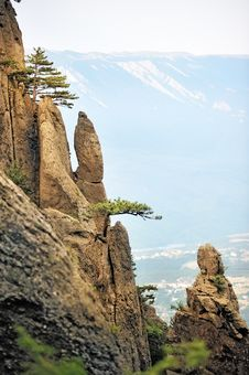 Free Pine Trees On The Steep Cliffs Royalty Free Stock Images - 25423779