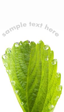 Free Green Leaf With Dewdrops Stock Photos - 25425973