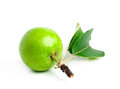 Free Green Apple With Leaves And Branch Stock Photo - 25432270