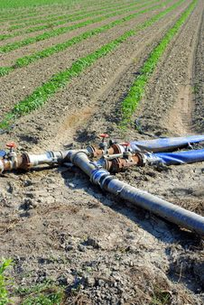 Free Water Pipes Used For Watering Tomatoes Stock Photo - 25440610