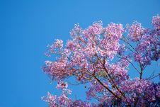 Free Violet Tree Stock Image - 25445141