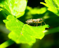 Free Assassin Bugs Stock Photos - 25451373