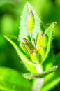 Free Spring Plant Stock Photography - 25451792