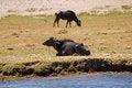 Free Wildebeest Resting Stock Photos - 25455363