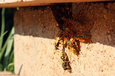 Free Wasps In The Nest Stock Image - 25453201