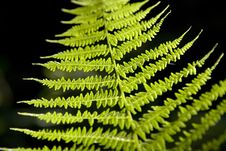 Free Green Fern Stock Photo - 25453610