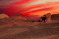 Free Sunset In The Stone Desert Royalty Free Stock Image - 25461436