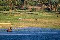 Free Nile Shore Panorama Stock Image - 25468121