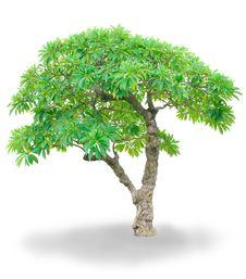 Free Isolated Tree Royalty Free Stock Photography - 25460727