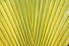 Free Leaf Stalk Of Traveller Palm Stock Image - 25466271