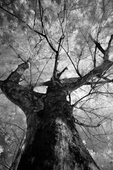 Infrared Tree Branch Stock Photography