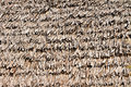 Free Thatched Palm Leaf Roof Royalty Free Stock Image - 25472096