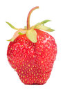 Free Red Strawberry Stock Photos - 25475923