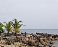 Free Palms And Rocky Shoreline Royalty Free Stock Photography - 25470377