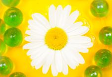 Free Beautiful Daisy Flower On Water Royalty Free Stock Photos - 25475748