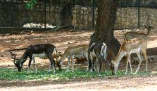 Free Deers Royalty Free Stock Photo - 25476825