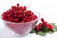 Ripe Red Currant Royalty Free Stock Photography