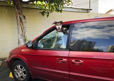 Free Waiting Dog Stock Image - 25487471