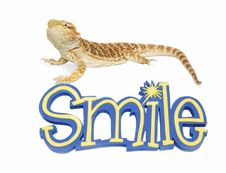 Free Bearded Dragon Can Smile Royalty Free Stock Photo - 25487855