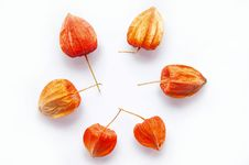 Free Physalis Royalty Free Stock Photo - 25488005