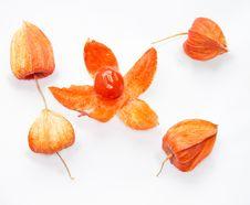 Free Physalis Fruit Stock Photo - 25488040
