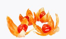 Free Physalis Royalty Free Stock Images - 25488059