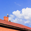 Free Stork Sitting On The Top Of A Roof Royalty Free Stock Photos - 25495628