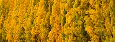 Free Autumn Tree2 Royalty Free Stock Images - 25493979