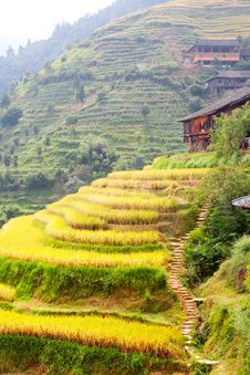 Free Terraced Fields Stock Photo - 25495810
