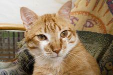 Free Kitten Stock Photo - 25499770