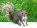 Free Hungry Squirrel Stock Images - 2555344