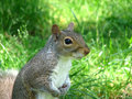 Free Cute Squirrel Stock Photography - 2555352