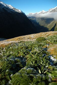 Free Milford Track Landscape Royalty Free Stock Image - 2551206