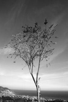 Free Tree Albero B/w Royalty Free Stock Photos - 2552478