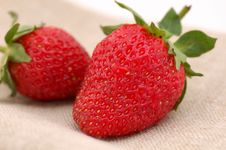Free Strawberries Stock Images - 2552514