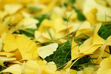 Free Autumn S Leaves Stock Photography - 2552982