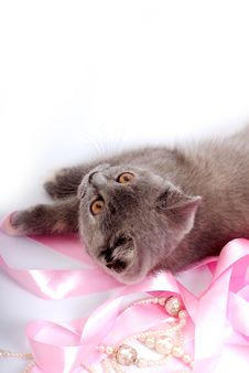 Free Grey Kitty Royalty Free Stock Photography - 2553067