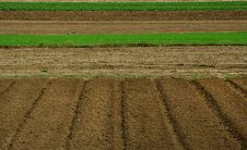 Free Agro Lines 02 Royalty Free Stock Photo - 2553335