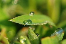 Free Green Grass And Water Droplets Royalty Free Stock Images - 2558999