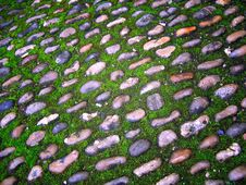 Free Moss And Cobbles Stock Images - 2559814