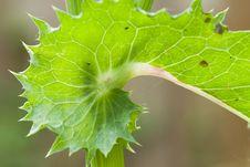 Free Thistle Leaf Stock Photo - 2559960