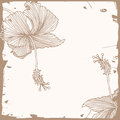 Free Floral Hibiscus Background Stock Photo - 25502850