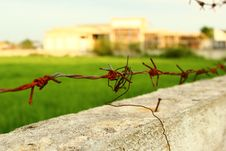 Free Thorns Sharp Wire Royalty Free Stock Images - 25509859